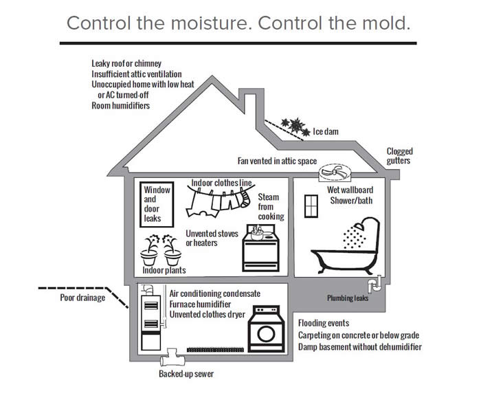 Control the moisture.  Control the mold.