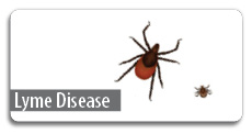 Click here for Lyme diseaase information