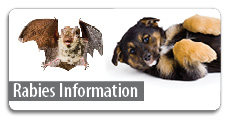 Click here for rabies information